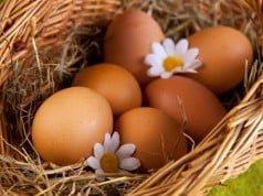 Ovos enriquecidos com Ómega 3 são bons para o colesterol