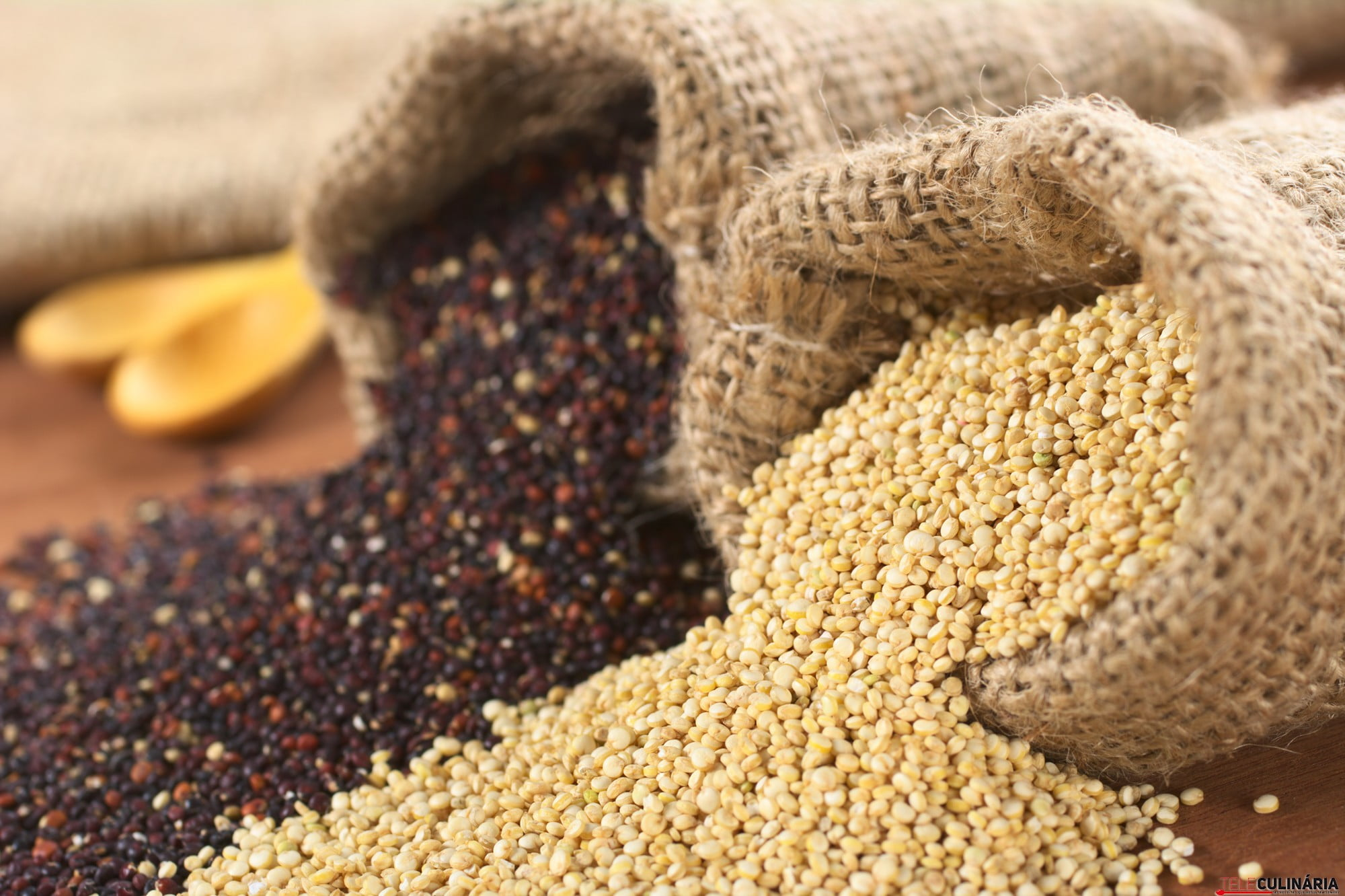 Raw red and white quinoa grains in jute sack on wood. Quinoa is grown in the Andes region and has a high protein content and a high nutritional value (Selective Focus, Focus on the white quinoa grains at the sack opening)