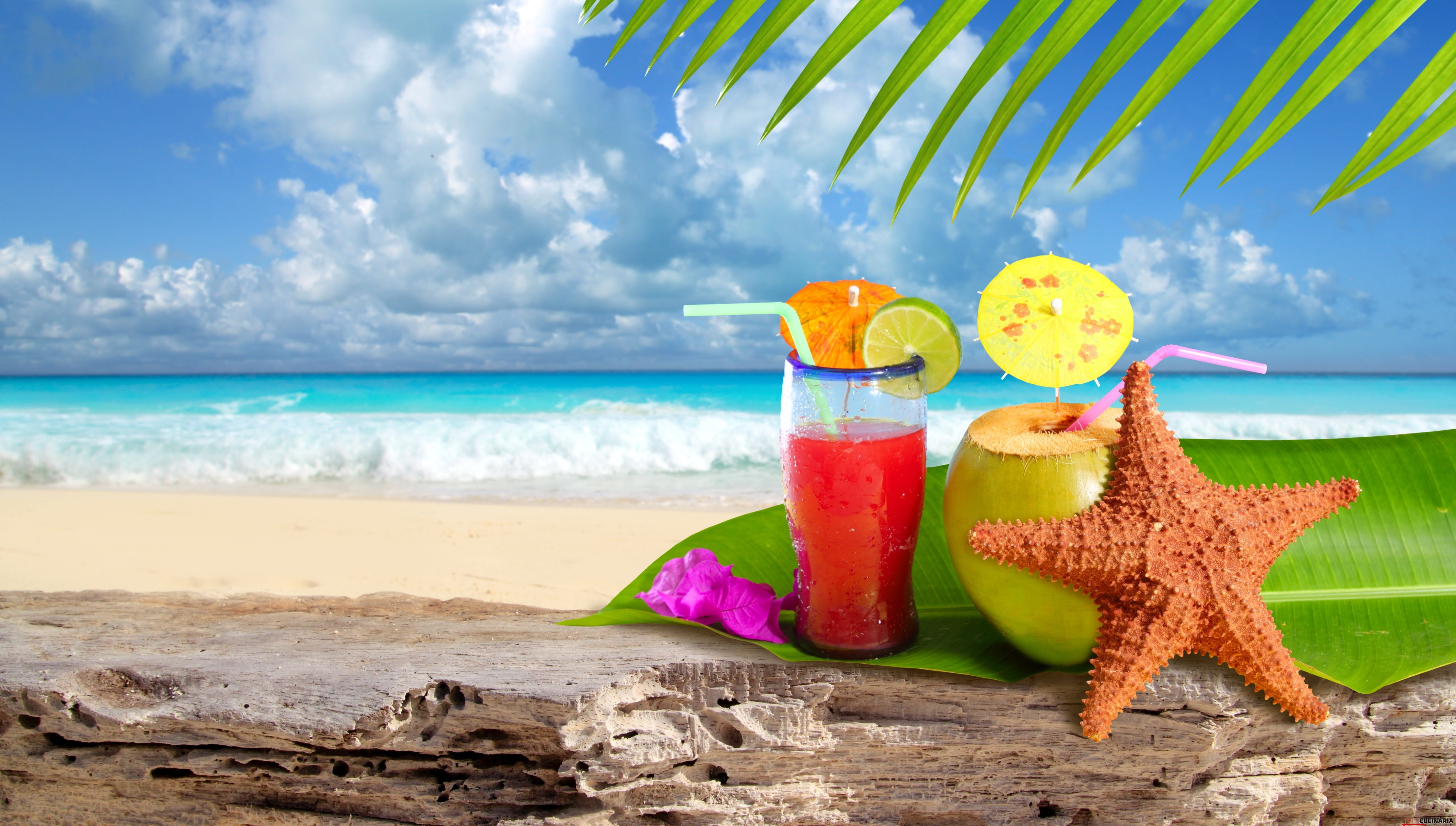 Coconut cocktail starfish tropical Caribbean beach refreshment